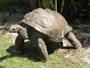 Giant Turtle sanctuary - best holidays for kids