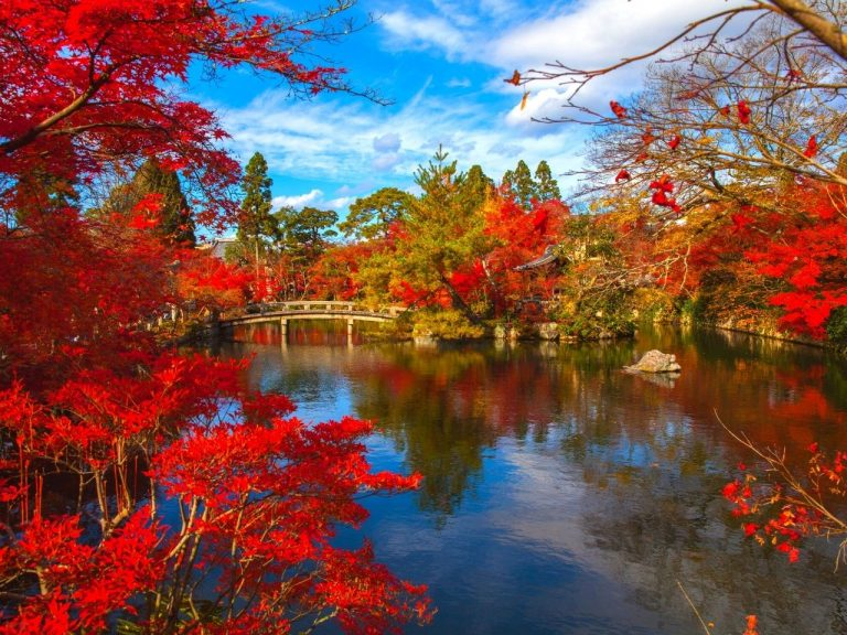 The bright red leaves of Kyoto, Japan