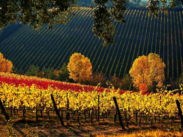 The Vineyards of Tuscany in Autumn