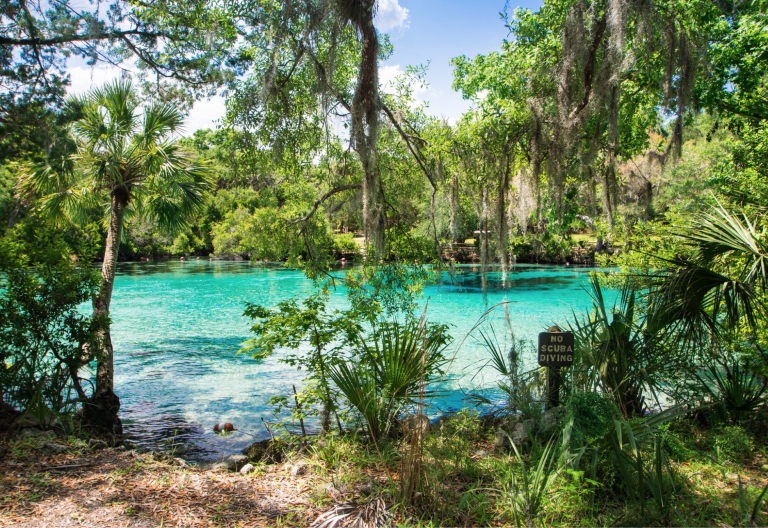 Relax and Rejuvenate under the winter sun in Orlando's Natural Springs